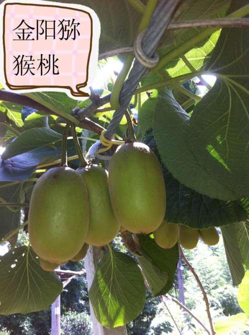 20130701 158_副本.jpg