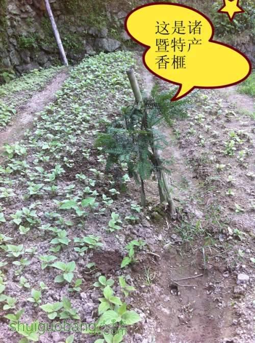 20130701 194_副本.jpg