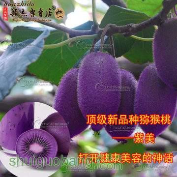 T15g0aFyBeXXXXXXXX_!!0-item_pic.jpg_360x360q90.jpg