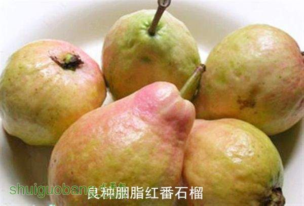 xiangxing_201203070338363079.jpg