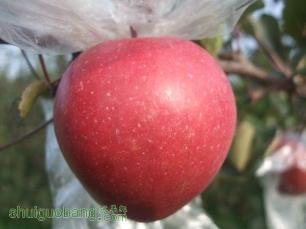 红色之爱、自然农法 011.jpg