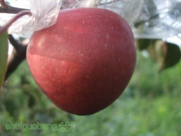 红色之爱、自然农法 010.jpg
