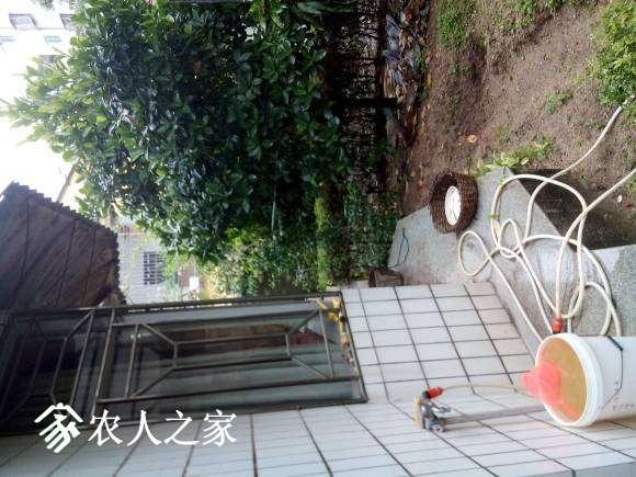 去年被台风打断。
