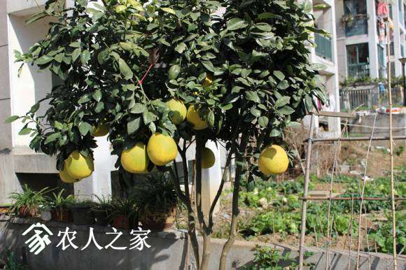 IMG_0192_副本.jpg