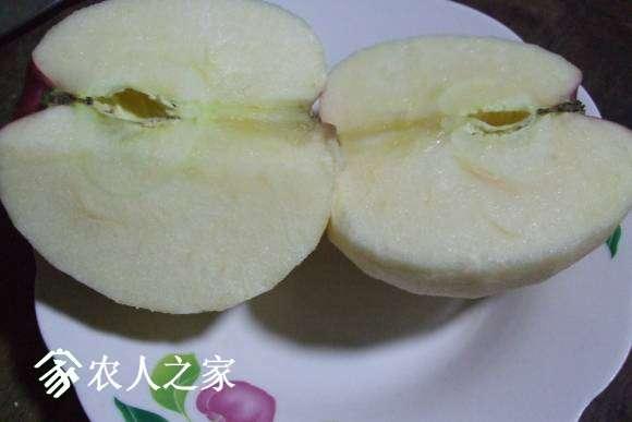 整地·秋香苹果 013.jpg