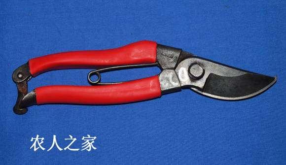 修复修枝剪-4.jpg