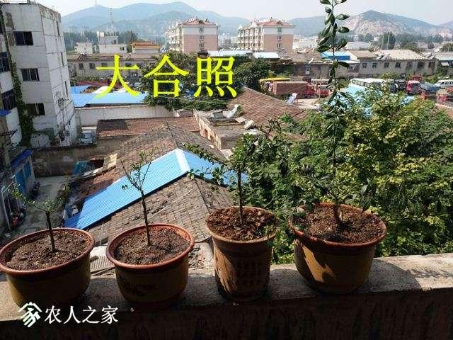 黄姐家特价绿皮白肉手指柠檬145.jpg