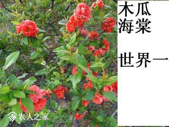 世界一开花图162619s1d313h1v31gg43h (1).jpg