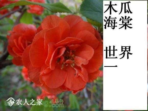 世界一开花图162619s1d313h1v31gg43h (2).jpg