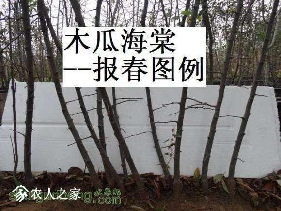 蜀红报春苗图162650u6axzlgxgd0dgdha (1).jpg