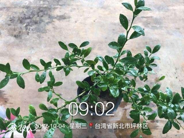 QQ图片20171004145134.jpg