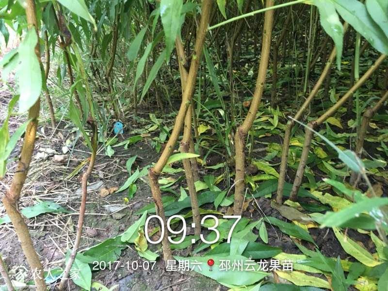 095804morsa8yzyorgeeyl.jpg