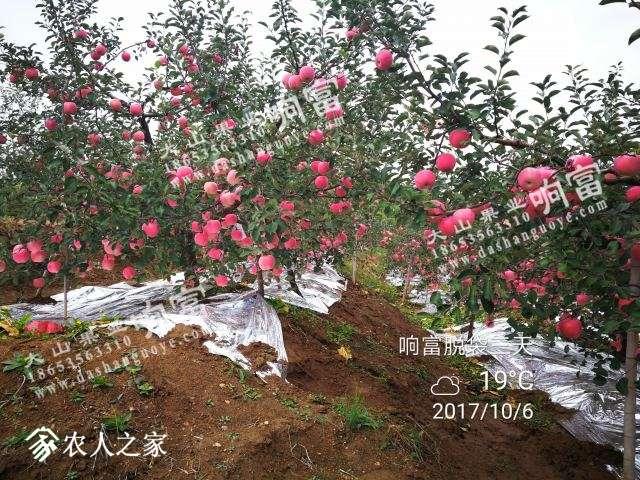 IMG_20171006_142539_副本.jpg