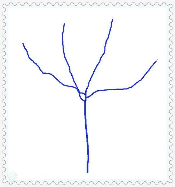 今年树形.jpg