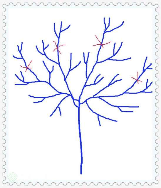 明年落叶后树形.jpg