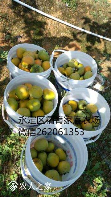 mmexport1513697874148_meitu_9.jpg