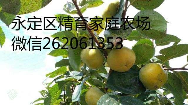 mmexport1513697929429.jpg