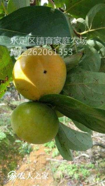 mmexport1513697944036_meitu_7.jpg