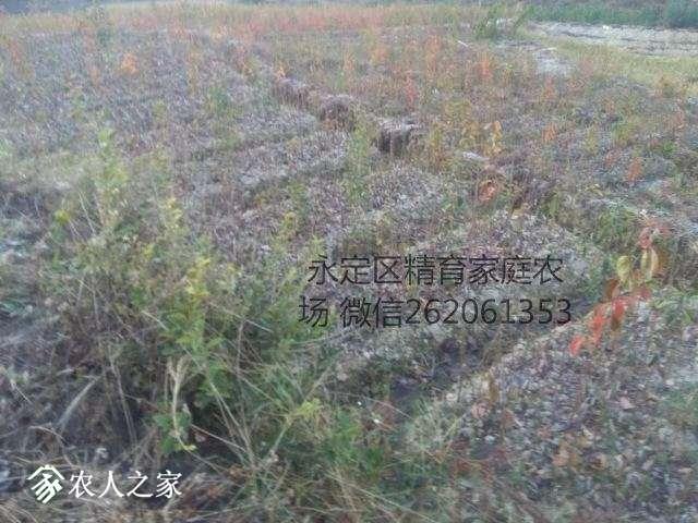 mmexport1513732183103_看图王.jpg