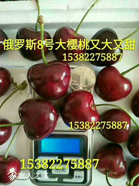 120700ihtpp3xzn137tppx.jpg