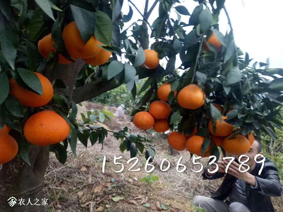 185948yi8r4fw94affr2il.jpg