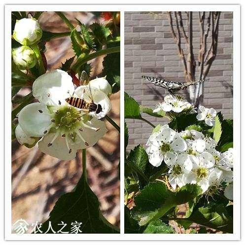 蜜蜂和蝴蝶.jpg