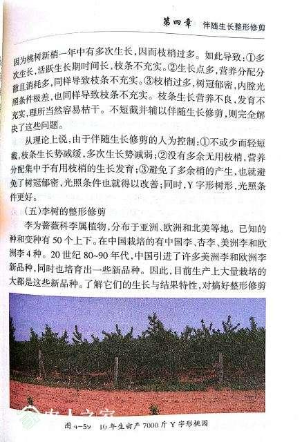 桃树修剪9.jpg