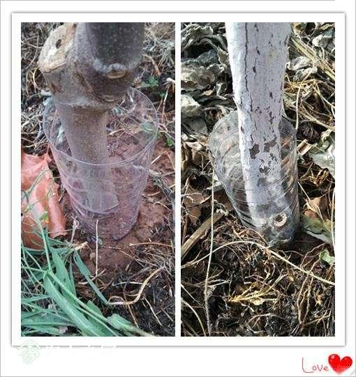 塑料瓶子2.jpg