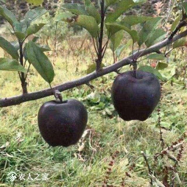 黑苹果3.jpg