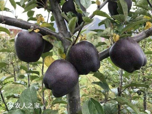 黑苹果4.jpg