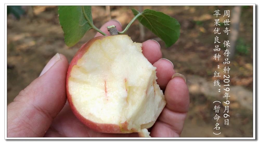 红线苹果3.jpg
