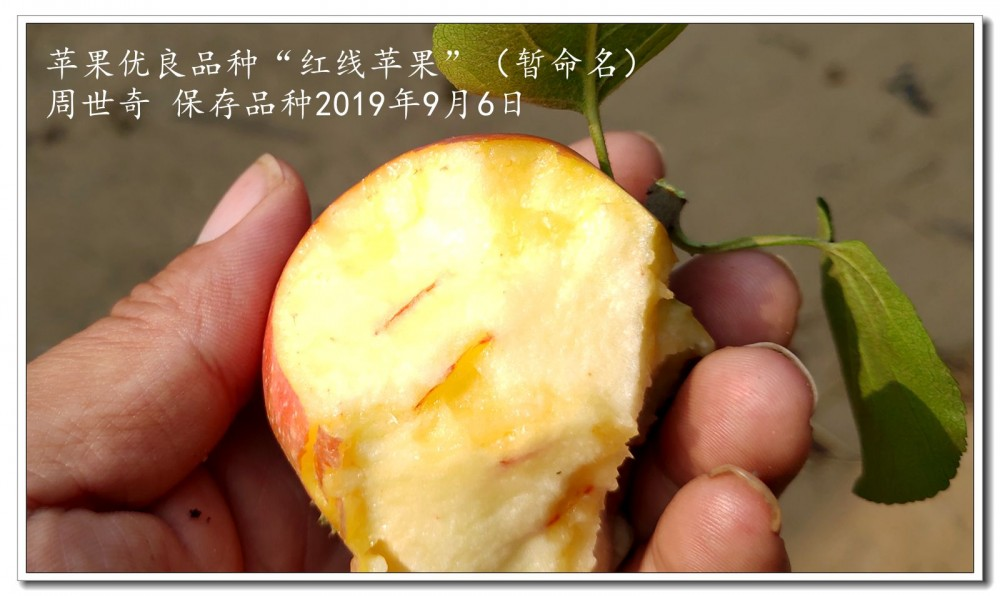 红线苹果2.jpg