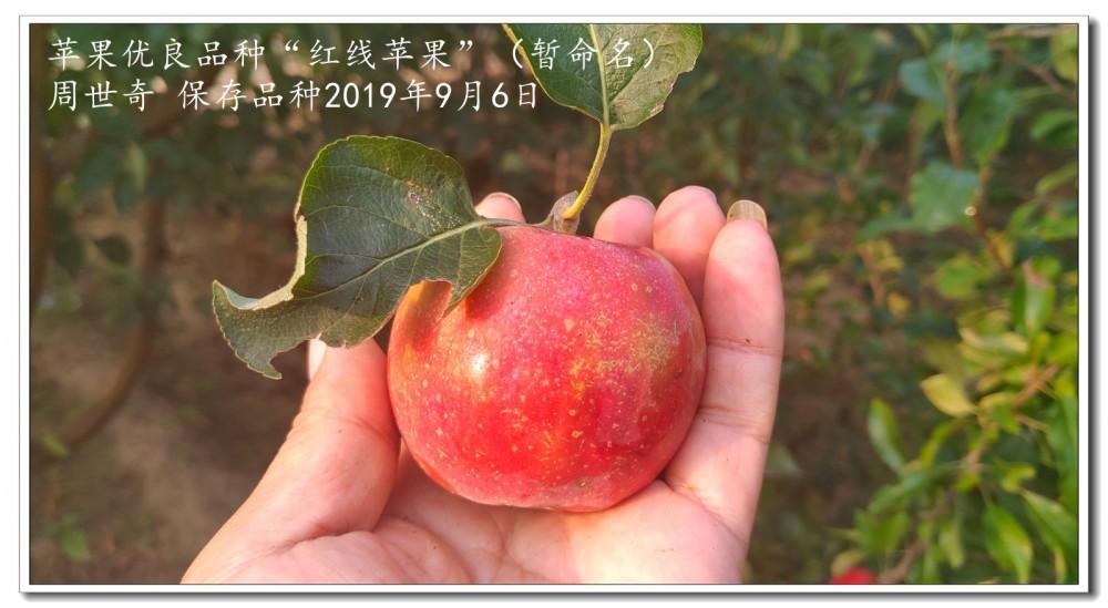 红线苹果1.jpg