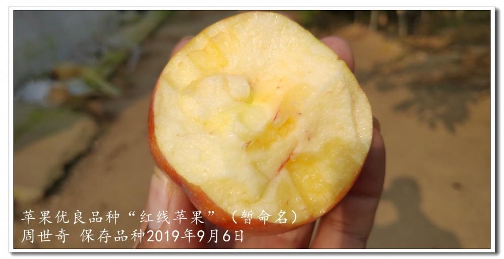 红线苹果4.jpg