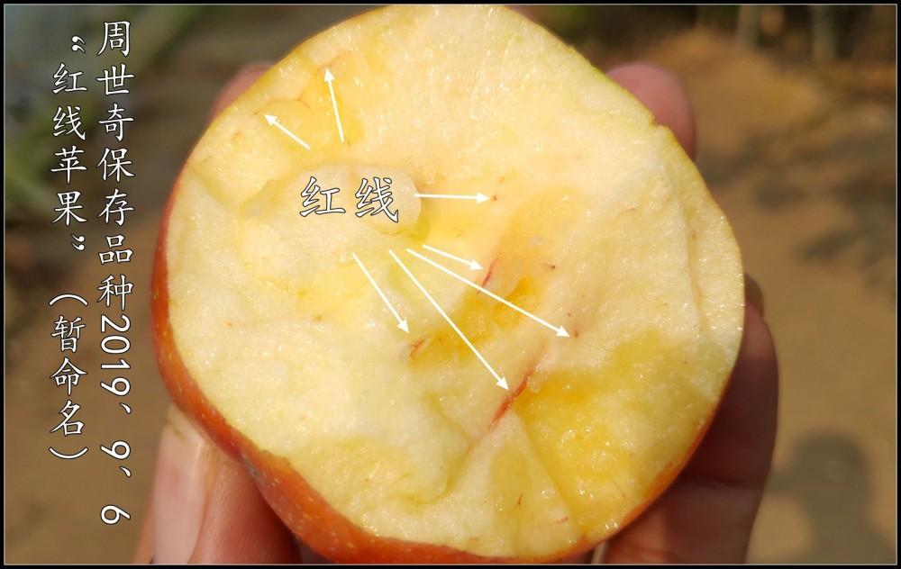 红线苹果8.jpg