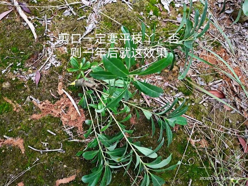 微信图片_20201216111328.jpg
