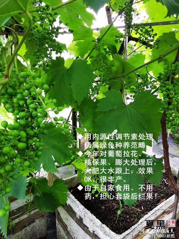 IMG_20210507_180432-G.jpg