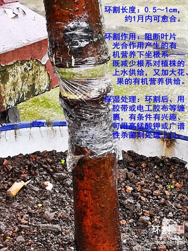 IMG_20200607_101655_副本.jpg
