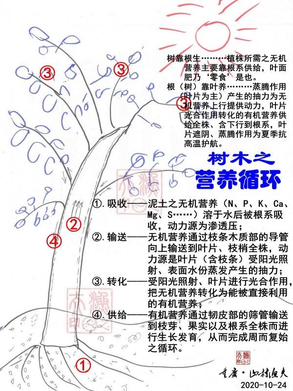 树木的营养循环-G.jpg