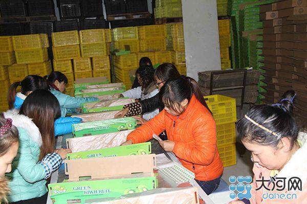 """果然风情:昂起西峡猕猴桃产业""""龙头"""""""