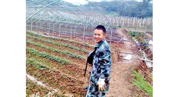 重庆沙坪坝:不做白领做果农大学生创业种草莓