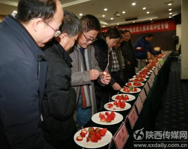 西安市农民科学种植技能大赛长安草莓专场成功举办