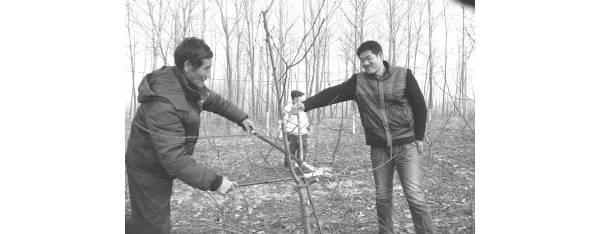 山东郯城:土专家免费传授林果技术20年