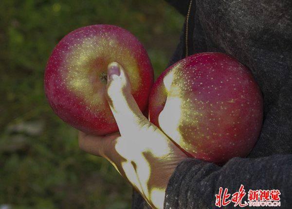 """""""爱心苹果""""因何让人伤心? 滞销背后竟是商业营销"""