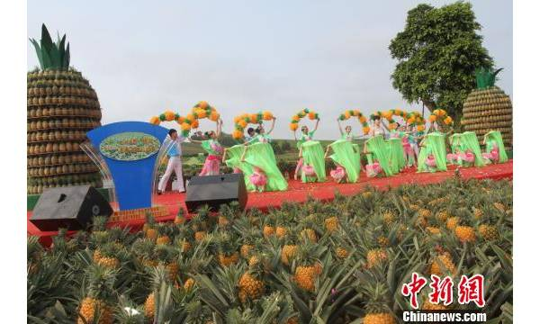 """""""中国菠萝之乡""""徐闻办首届菠萝文化节"""