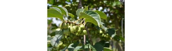 不忘初心,方得始终,且看益诺仕如何一步一个脚印打造奇异莓王国